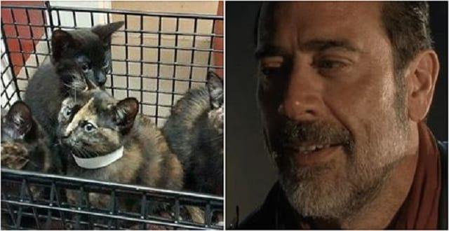 Jeffrey Dean Morgan, 'Negan' of The Walking Dead, Almost Brought Kittens to 'Talking Dead' Following Season Premiere!
