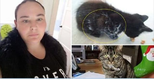 Cat Owner is Convinced the Ghost of Her Missing Cat Has Appeared in the Fur of Her New Cat!