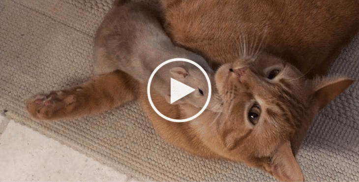 Tiny Rat Follows Cat Everywhere And They Become Inseparable!