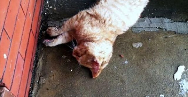 Man Discovers Frozen Cat on His Front Porch - But Then ...