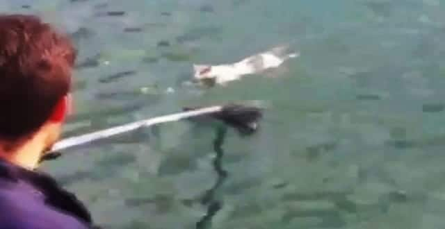 Lost Cat Swam a Mile Out to Sea Being Attacked by Seagulls – And Then …