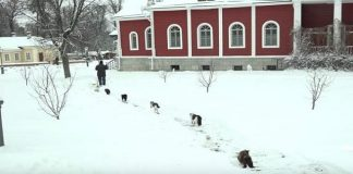 One Russian Monastery's Adorable Daily Procession of Cats!