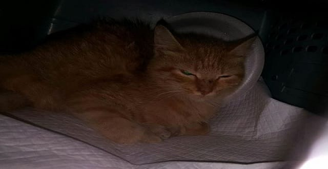 Cat Rescue Hopes to Help Animal After Catastrophic Injury!