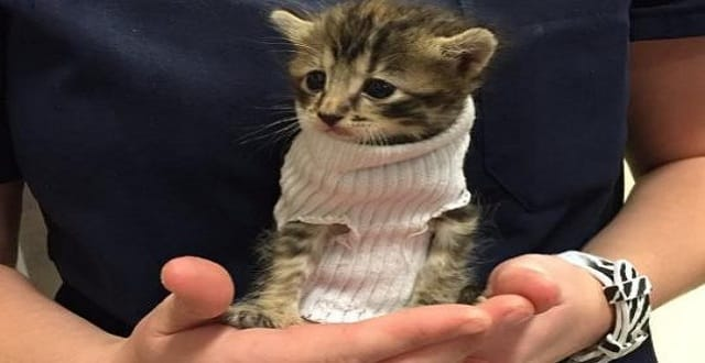 Kitten Rescued During Hurricane Matthew, Brought to Pet Hospital and Given a Tiny, Warm Jumper!