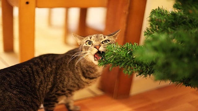 Dogs And Cats That Completely Destroyed Christmas!