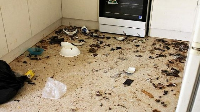 Cat faeces litter the floor of a home in Adelaide, Australia (RSPCA South Australia)