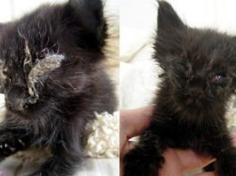 Kitten Drastically Changes After Just 5 Days - Wait 'Til You See Her Now!