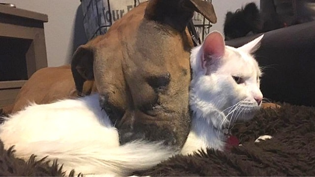 Dog With Only One Eye And Unwanted Cat Form Adorable Friendship!