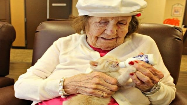 Senior Citizens Helping Raise Shelter Kittens – This Is the Most Inspirational Story You Will Read Today!