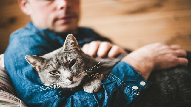 20 Reasons To Be Thankful For Our Cats This Thanksgiving (And Every Day)!