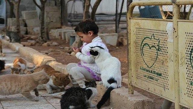 NEW: The Cat Man of Aleppo – Once Again – Going Above and Beyond!