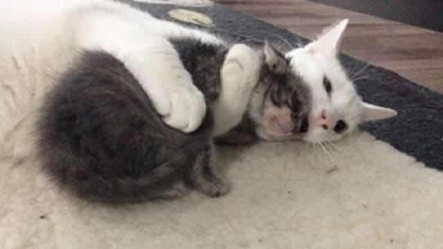 Cat Who Was Rescued By A Vet, Finds His Own Unique Way of 'Giving Back'!