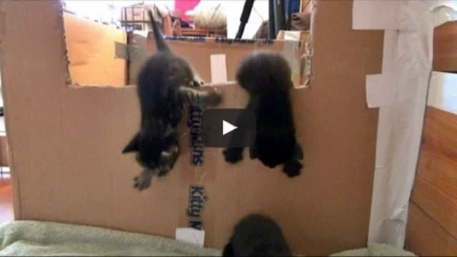 Watch This Great Kitten Escape!