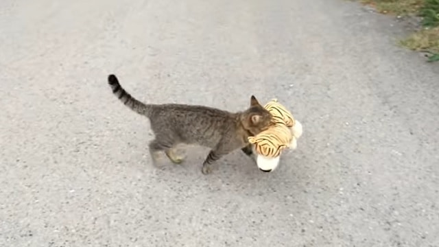 Cat Visits Neighbor to Borrow Something Very Special!