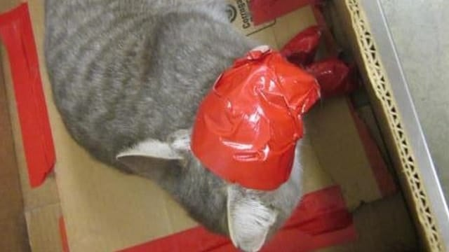 Yet Another Cat - Bound in Duct Tape, Abandoned in a Box!