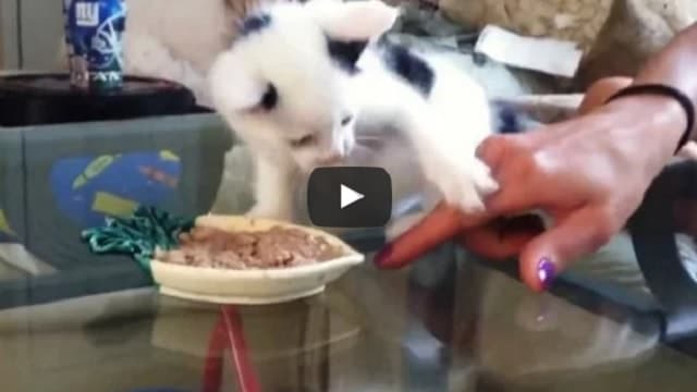 These Cute Kittens Really Don't Want to Share Their Food!