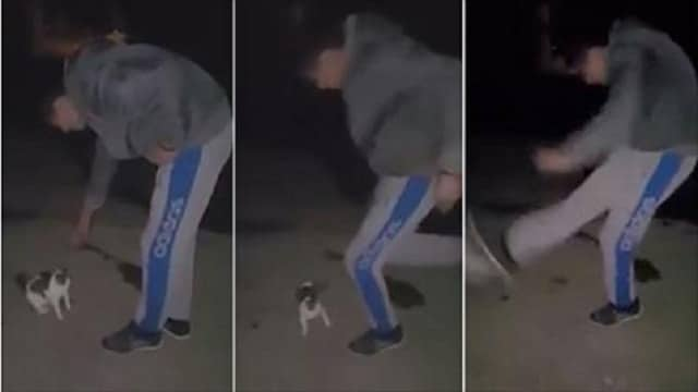 Disgusting Video Shows Man Pretending to Pet Cat Before Kicking It, Police Refuse to …