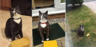 Milo the Cat Won't Stop Bringing Home Sponges, Leaving His Humans Completely Baffled!