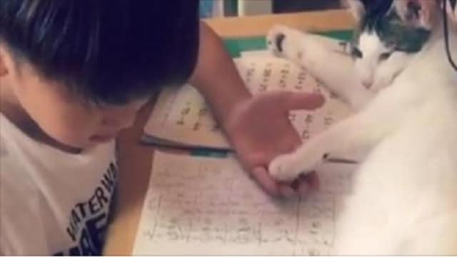 Kid Attempts To Do His Homework but Has An Adorable Cat Trying His Best to Get His Full Attention!