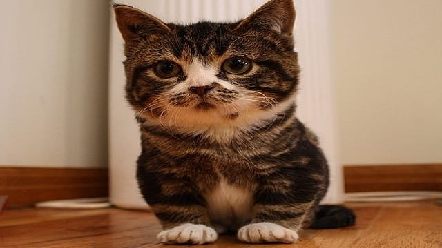 Kittens Who Were Born With Dwarfism Are Abandoned By Their Owners, But Their Rescuers See The Truth!
