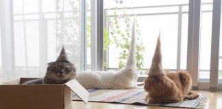 GALLERY: Check Out These Cats Wearing Hats Made from Their Own Hair!