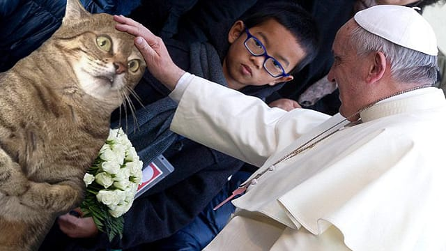 GALLERY: Perplexed Kitty Getting Pet Inspires 'Confusing' Photoshop Battle