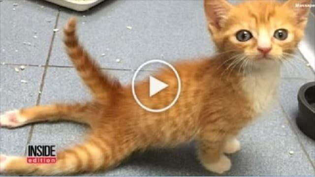 Paralyzed Kitten Walks for the Very First Time!