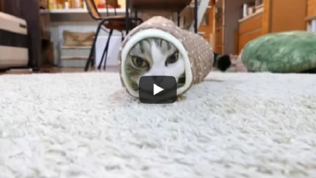 Maru the Cat Turns into a Snake – Click For a Good Laugh!