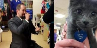 Adorable Shelter Kitten Helps Man Propose to Girlfriend in the Sweetest of Ways!