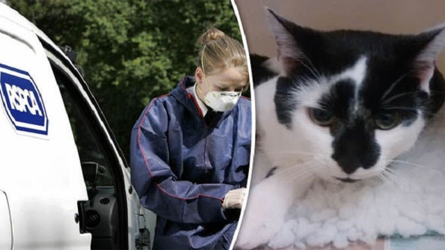 The RSPCA a looking for the thug who dropped this cat out of a window