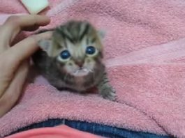 Baby Ziggy Meows for the Very First Time and She Sounds Just Like a Duck!