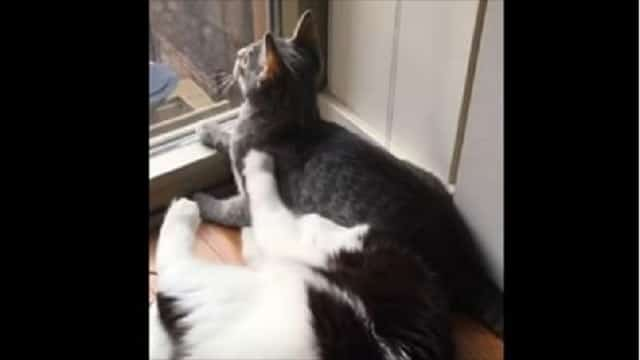 Silly Cat Takes a Seat – Right On Another Cat's Head!