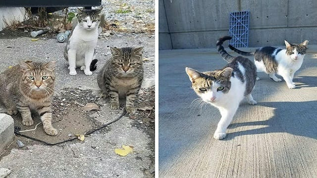 PETITION: Attempts to Keep Coyotes at Bay Is Starving Astoria Feral Cat Colony, Caretaker Says