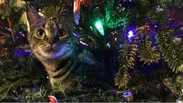 6 Helpful Tips to Help Keep Your Pets Safe During the Holidays!