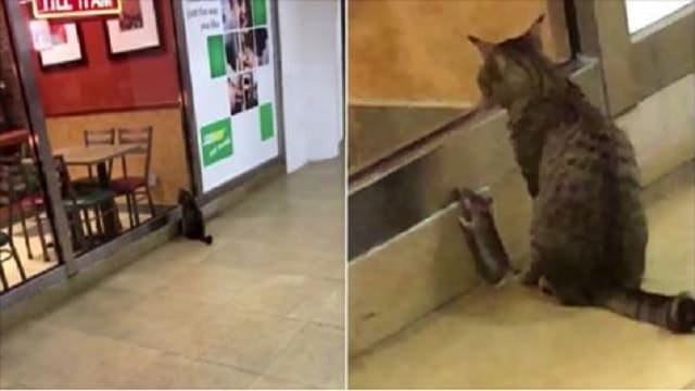 WATCH: Real Life Tom and Jerry Planning Steal Some Yummy Sandwiches!
