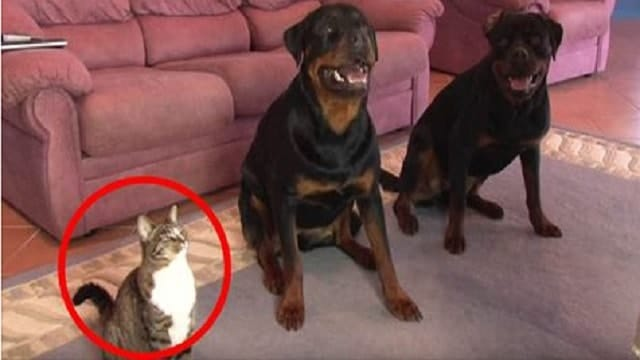 This Kitty Is A Real Copy Cat! Just Watch What She Does When Her Owner Points At Her!