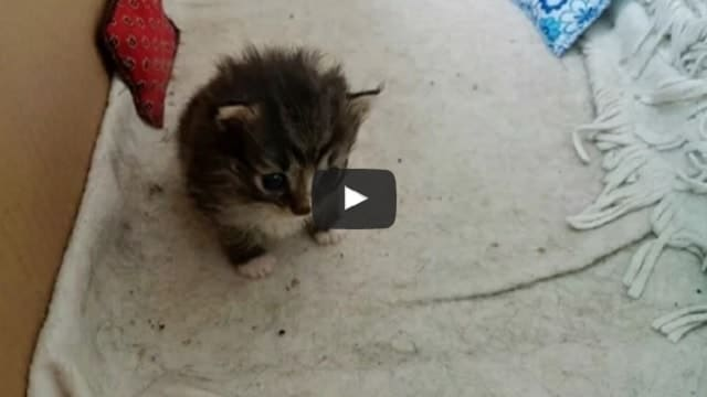 Stray Cat Brings Along a Tiny Surprise to Woman who Fed Her!