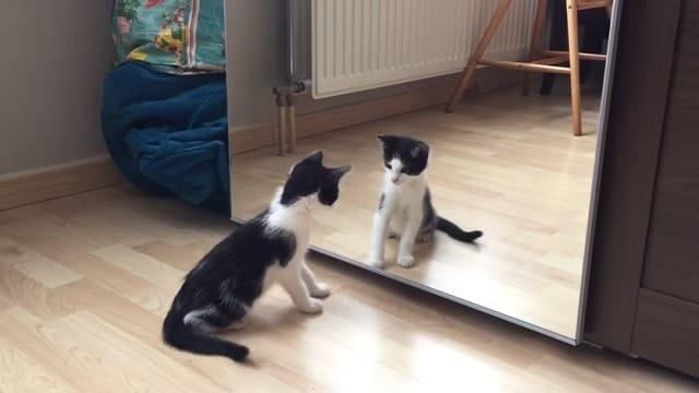 WATCH: Wiske The Kitten vs – A Mirror!