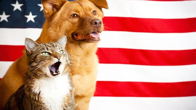 2016 Election: Which Candidate is the Most Animal-Friendly? Let's Weigh the Facts!