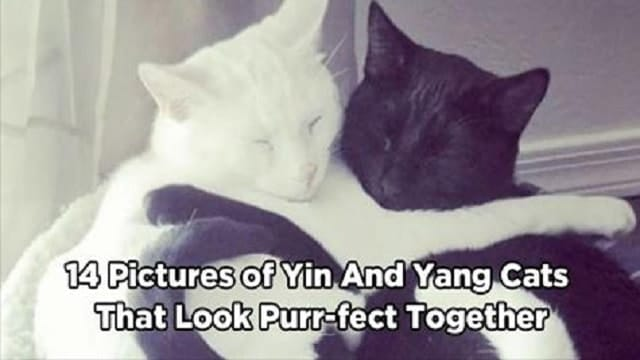 13 Pictures of Yin And Yang Cats That Look Absolutely Purr-fect Together!