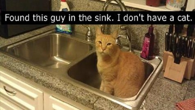 13 People Who Didn't Think They Had A Cat But Were Wrong!
