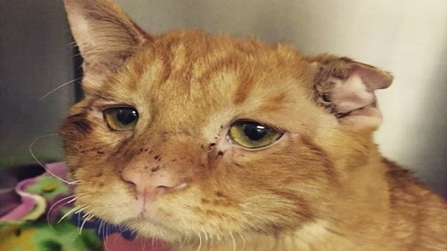 Couple Adopts 'Sad Cat' Who Was Almost Put Down - Wait Until You See The Transformation!