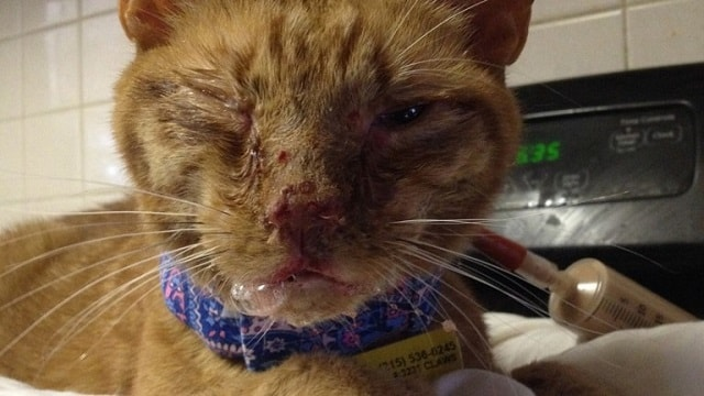 Ginger Cat Rescued From Death Row – Wait Until You See Him Now!