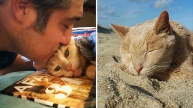 Abandoned Senior Cat Finds Loving Home – And His Life Is Just Beginning!