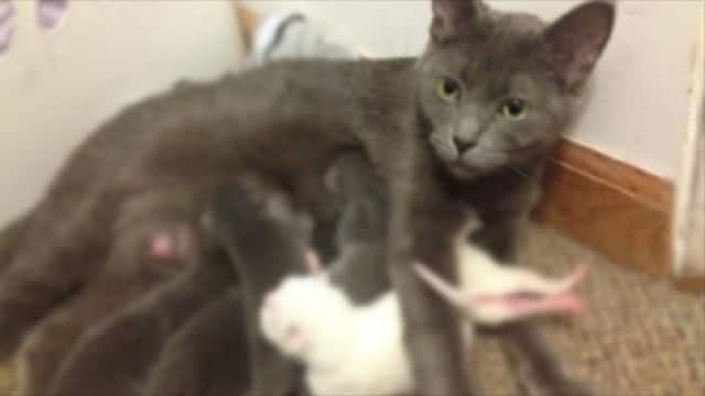 Pregnant Cat Completely Takes Over Unsuspecting Man's Home – Turns His Life Upside Down!
