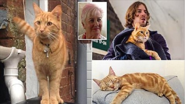 Pet Ginger Cats Being Stolen Throughout Britain – You Won't Believe 'Who's' Being Blamed!