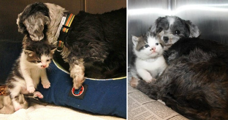 Stray Dog Rescues An Abandoned Kitten!