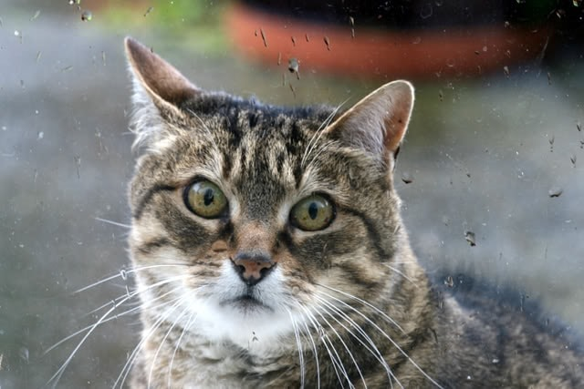 Brave Mama Cat Braves Storm – and The Hell She Went Through!