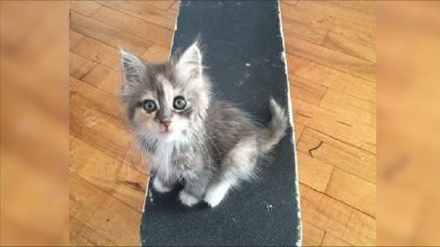 Stray Kitty Approaches a Guy a Year Ago, Claims His Skateboard and His Heart - Check Out the 'Now' Pics!
