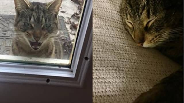 Very Determined Stray Cat Wanted to Be With This Family So Bad, She Escaped from a Shelter – And Found Them!